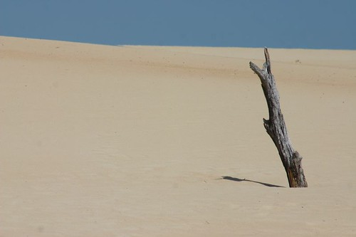 Henty Dunes, Western Tasmania..