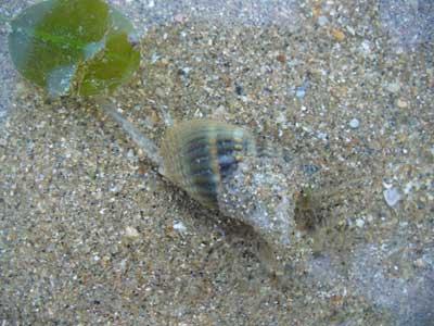 Snail-P1050434