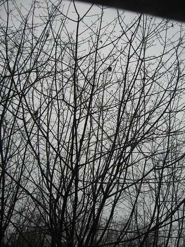 Gray branches