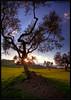Ulivi (otrocalpe) Tags: sun hdr ulivi