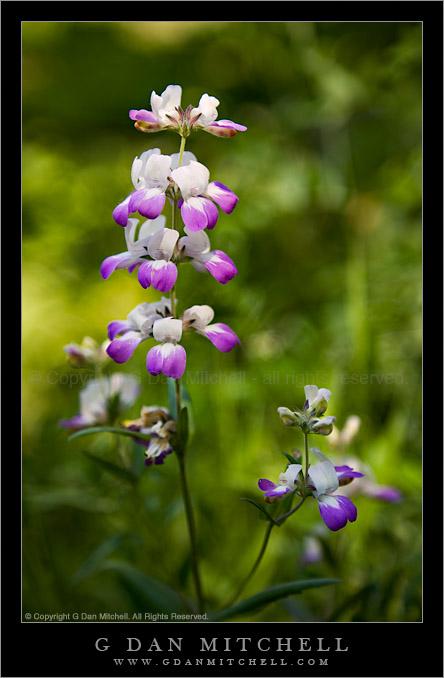 Purple And White Wildflowersg Dan Mitchell Photography