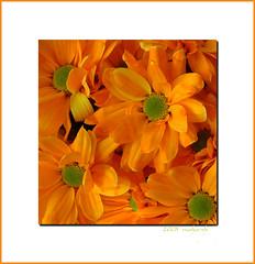 frhlichkeit _ joyance (moha-sh) Tags: flowers orange flower green nature natur blumen explore bloom grn naturesfinest blhte masterphotos mohash peachofashot