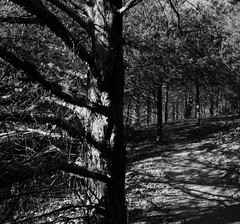 Black& White Tree RBSP (dawsonjoe) Tags: trees blackandwhite nature landscape path trail bandw b38w black38white