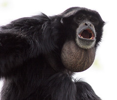 Giving you a Holler.....! (Connie Lemperle) Tags: explore karma animalplanet cincinnatizoo animaladdiction specanimal lemperleconnie allrightsreserved ohiozoos zoosaroundtheworld zoosofnorthamerica