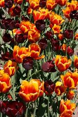 IMG_0132 (Raf Ferreira) Tags: ontario canada gardens botanical spring hamilton royal rafael 2008 rbg ferreira peixoto