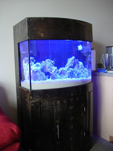Actinics On & Update: 36 Gallon Bow Front Reef Tank Project | 3reef Aquarium Forums
