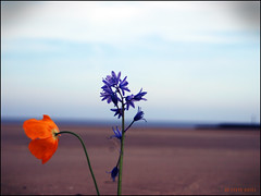 local coast (stevebates101) Tags: flowers beach liverpool coast dof steve 101 elite bates wirral capitalofculture a aplusphoto e410 coloursplosion peachofashot