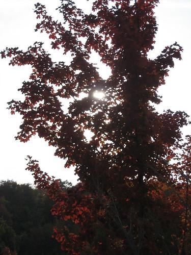 red sunlight