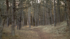 The peaceful walk (Rind Photo) Tags: path forrest light dof peace isolation walking nature trees dreamscape landscape