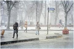 Snowstorm on Soborna square (Austria Platz). Chernivtsi, Ukraine. (Ігор Кириловський) Tags: snowstorm sobornasquare austriaplatz chernivtsi ukraine slr fujica stx1 carlzeiss sonnar jena ddr mc f35135 kodak colorplus 200