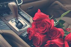 (- M7D . S h R a T y) Tags: morning flowers red roses flower color colors rose bokeh s cayenne porsche  wordsbyme allrightsreserved