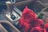 يــا مـاخــذهـ الـقـلــب إسـرحـي وإمـرحـي (- M7D . S h R a T y) Tags: morning flowers red roses flower color colors rose bokeh s cayenne porsche صباحالخير wordsbyme allrightsreserved™