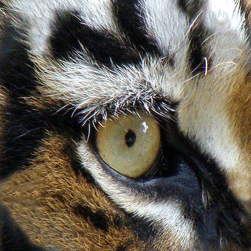 Eyes of the Tigers 2