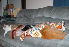 Signs of Fall (Bad Hippie) Tags: kitties stinky ziggy picky