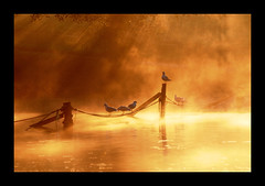 the mist (Maddie Digital) Tags: park sun lake water sunshine weather birds fog liverpool sunrise gulls list posts seftonpark