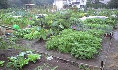 今週の市民農園: 全景