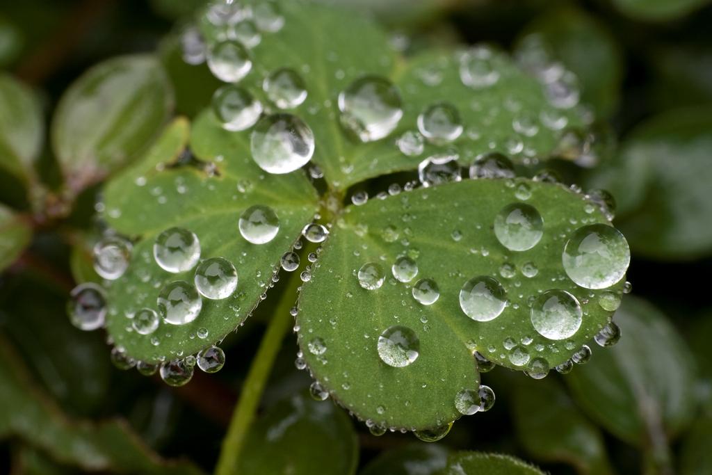 waterdrops-3