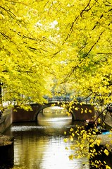 Leliegr. (Bojd) Tags: bridge autumn orange oktober holland fall water amsterdam yellow boot canal october europe herfst nederland brug leafs waterway jordaan noordholland gracht leliegracht lelie leliegr