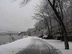 riparia-1134 (oursonpolaire) Tags: winter ottawariver