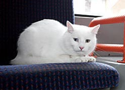 macavity marulo mascotas autobús