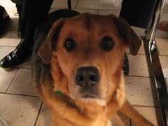 Thanksgiving (10) (chicgeekuk) Tags: thanksgiving york uk friends food dog laura dinner table floor united kingdom kishimoto fatta finny laurakishimoto laurakishimotoca finneil