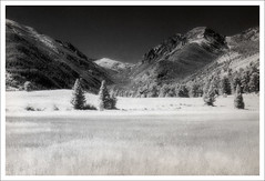 horseshoe park I (cassandi) Tags: by landscape colorado with x d76 infrared rockymountainnationalpark nikonn90s kodakhie horseshoepark 8x12print orientalvc sandiwright cassandrawright
