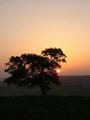 Amanecer en la campia (RBolance) Tags: espaa andaluca spain amanecer crdoba campia naturesfinest guadalcazar rbolance ltytr1 superlativas