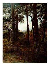 Scotch Firs by Millais 1873 (Martin Beek) Tags: trees art museum woodland landscape scotland perthshire victorian artists painter millais artworks birnam theforest inthewoods landscapepainting colection scottishlandscape personalcollection stmarystower johneverettmillais virtualmuseum victorianpainting tonalist woodlandart millaislandscapes scotchfirs scottishpainting cybermuseum avirtualmuseum millaisscottishlandscapes millaisinscotland latemillais millaislandscapebackgrounds acyberartmuseum artselection personalchoicecollection victorianlandscapepainting artistictreasures avirtualartgallery tutorialfilesonmillaislandscapes