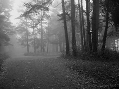 Foggy Forest (Nadie Lebedeva-Martinezz) Tags: nature fog mystery forest rainbowhunt