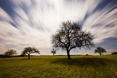 the night of the owls (Mace2000) Tags: longexposure trees moon nature field night clouds germany landscape deutschland nightshot nacht natur fullmoon moonlight 5d landschaft bume owls langzeitbelichtung stupferich countryscenery img2548 mace200