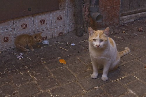 Moroccan Cats 3