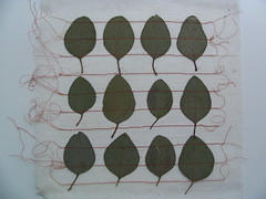 12 leaves (assemblage) Tags: orange white green leaves mesh assemblage sewing eucalypt handsewn sewn