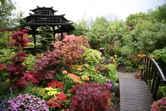 Middle Garden Spring (photo 3 on garden plan for national garden competition) (Four Seasons Garden) Tags: fourseasons garden acers bridge conifers azaleas spring charityopendays walsall blackcountry uk england pagoda english staffordshire ngs nationalgardenscheme bigpicture2008 nature gardenstosee favoritegarden dailymail winner national competition daily mail red saveearth englishgarden urbangarden colour beautiful peaceful maple oriental japanese fourseasonsgarden flower flowergarden gardens ericaceae rhododendron four seasons west midlands open day colours wonderfulworldofflowers all tony marie newton picture gazebo wooden