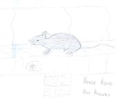 house mouse journal
