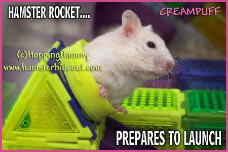 Preparing to launch ... creampuff!