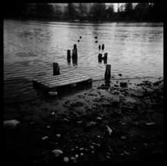 ------- (medejavecu) Tags: wood bw white lake black 120 6x6 film beach water analog mediumformat river dark see holga wasser scan ilfordhp5 sw analogue ufer fluss weiss konstanz schwarz lakeofconstance mittelformat seerhein