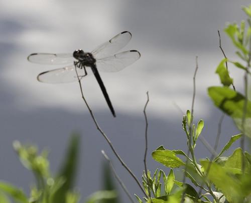 Reedy Pond-15