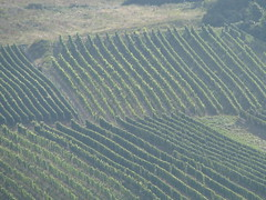 Rhine River 023 (Danette Marcoccia) Tags: germany vineyards rhineriver