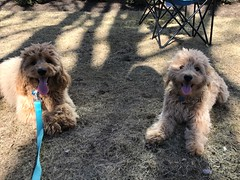 Liesel and Nolan's Ivy and Leo on one of thier play dates!
