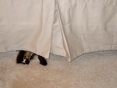 Somebody thinks she's hiding