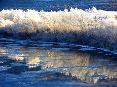 Reflections in a freezing river.. (elysea100) Tags: white snow cold ice water norway river october bravo freezing arctic tana soe breathtaking finnmark fpc golddragon abigfave superaplus aplusphoto superbmasterpiece diamondclassphotographer
