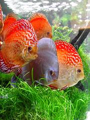 Fishes at an Exibition (Soulgiufo) Tags: fish acquarium salento lecce