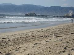 Up the beach (Wetchman) Tags: honeymoon rizzo wetjen