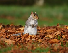 Now where did I put those nuts?