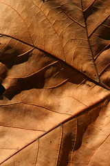 (Wind Home) Tags: macro fall nature leaf soe naturesfinest 10faves shieldofexcellence anawesomeshot isawyoufirst superbmasterpiece