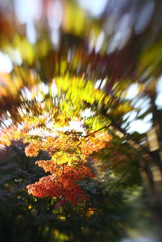 宮代の秋 -2- Lensbaby