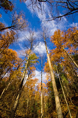 Once Upon the Sky (code poet) Tags: blue autumn trees sky tree fall topf25 leaves yellow topv111 clouds landscape topv555 topv333 kentucky topv1111 topv999 100v10f topv777 1022mm redrivergorge naturalbridgestatepark lowerhoodsbranchtrail