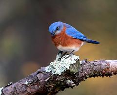 Peekabooo (Heavenhated) Tags: birds canon is wildlife specanimal platinumphoto anawesomeshot avianexcellence sigma300mmf28 godvivek copyrightstosvivek