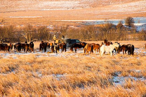 Feeding Horses 059