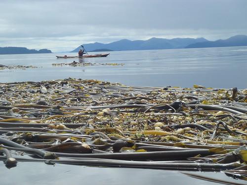 Haida Gwaii 1